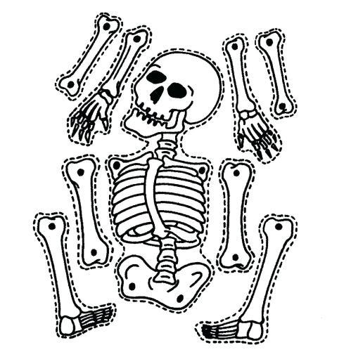 small resolution of 1481x1484 diagram sea animal skeleton diagram
