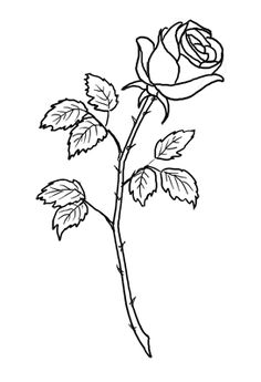 rose drawing tattoo stencil single outline stem flower roses drawings stencils outlines tattoos getdrawings