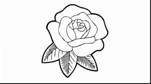 coloring rose drawing pages flower flowers yellow sheet getdrawings sketch elder petals falling template