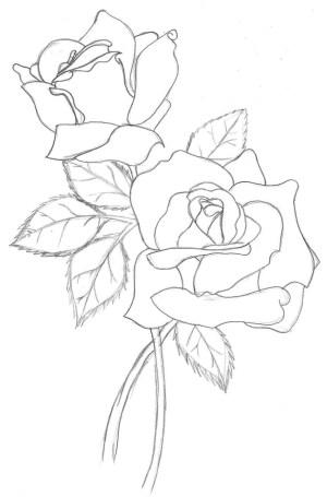 rose outline drawing line simple getdrawings drawings roses flower pencil
