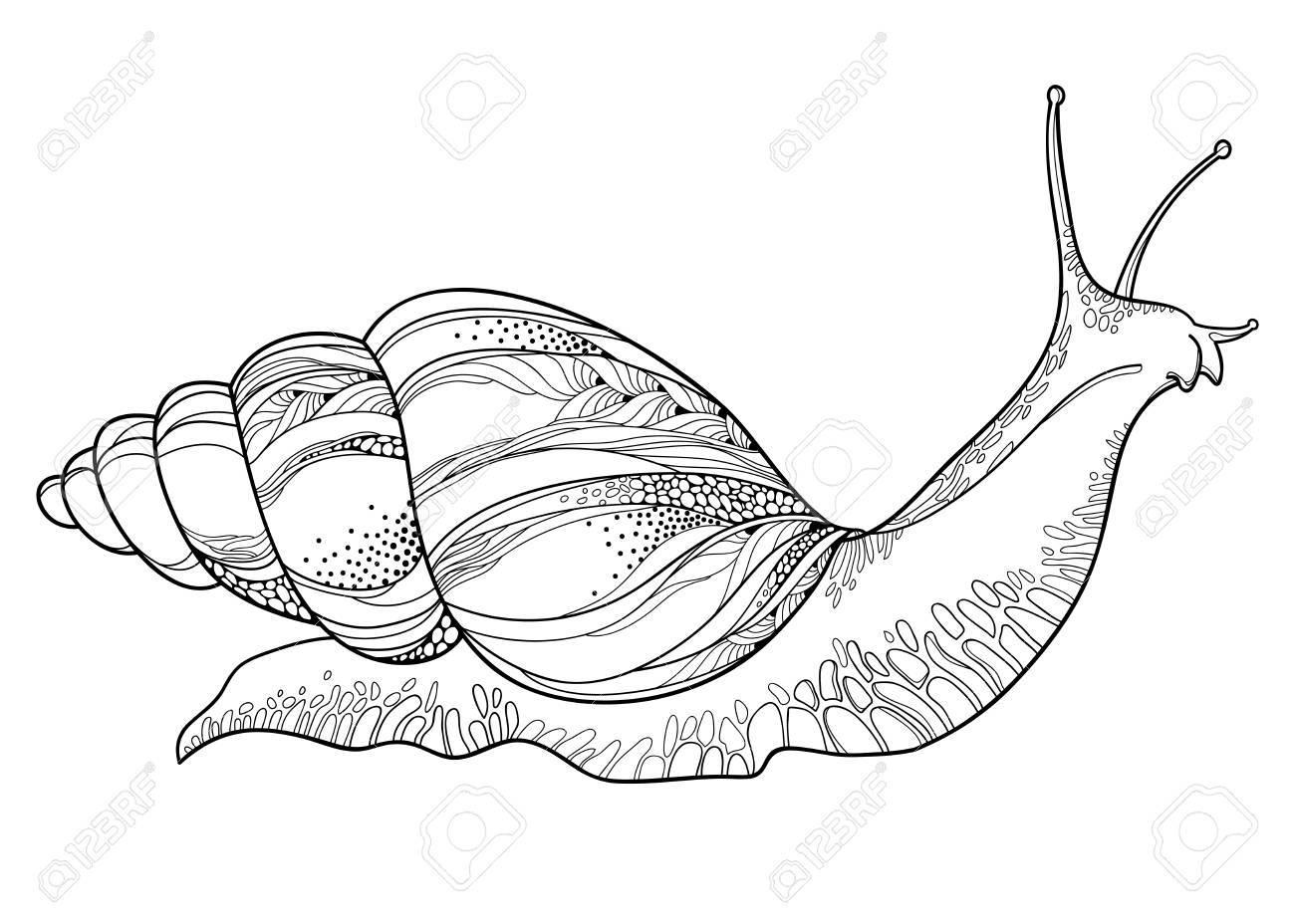 Snail Drawing At Getdrawings