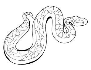 easy rainforest snake drawing step anaconda draw drawings animals coloring forest getdrawings rain paintingvalley