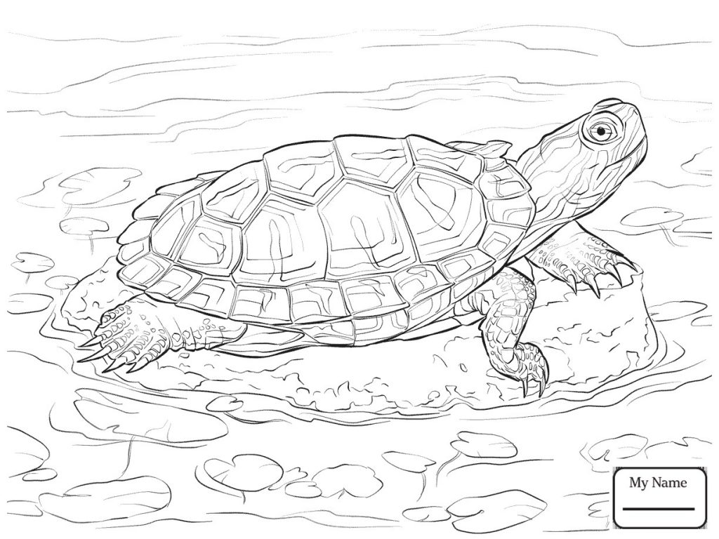 Snapping Turtle Drawing At Getdrawings