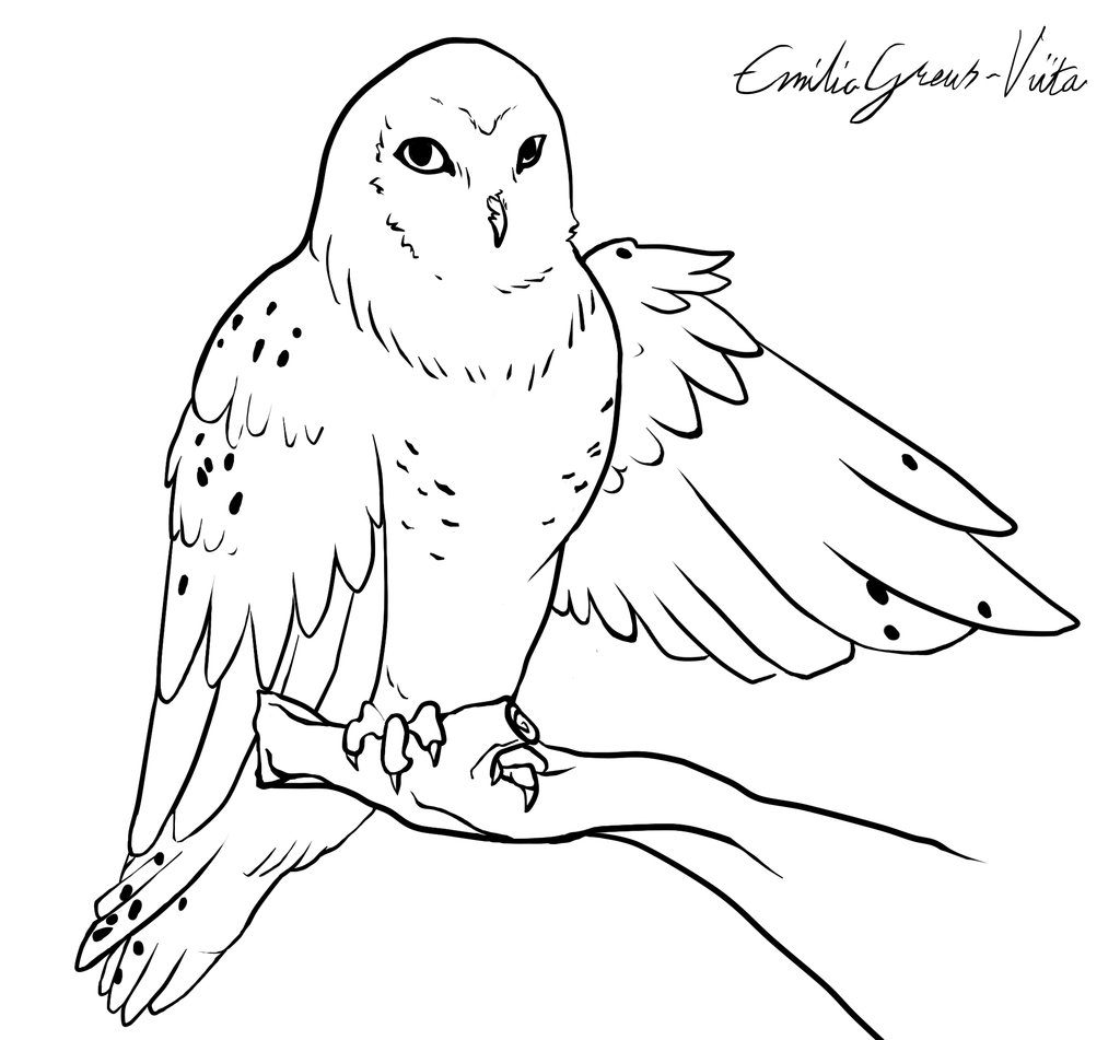 Snowy Owl Coloring Page That Are Impertinent