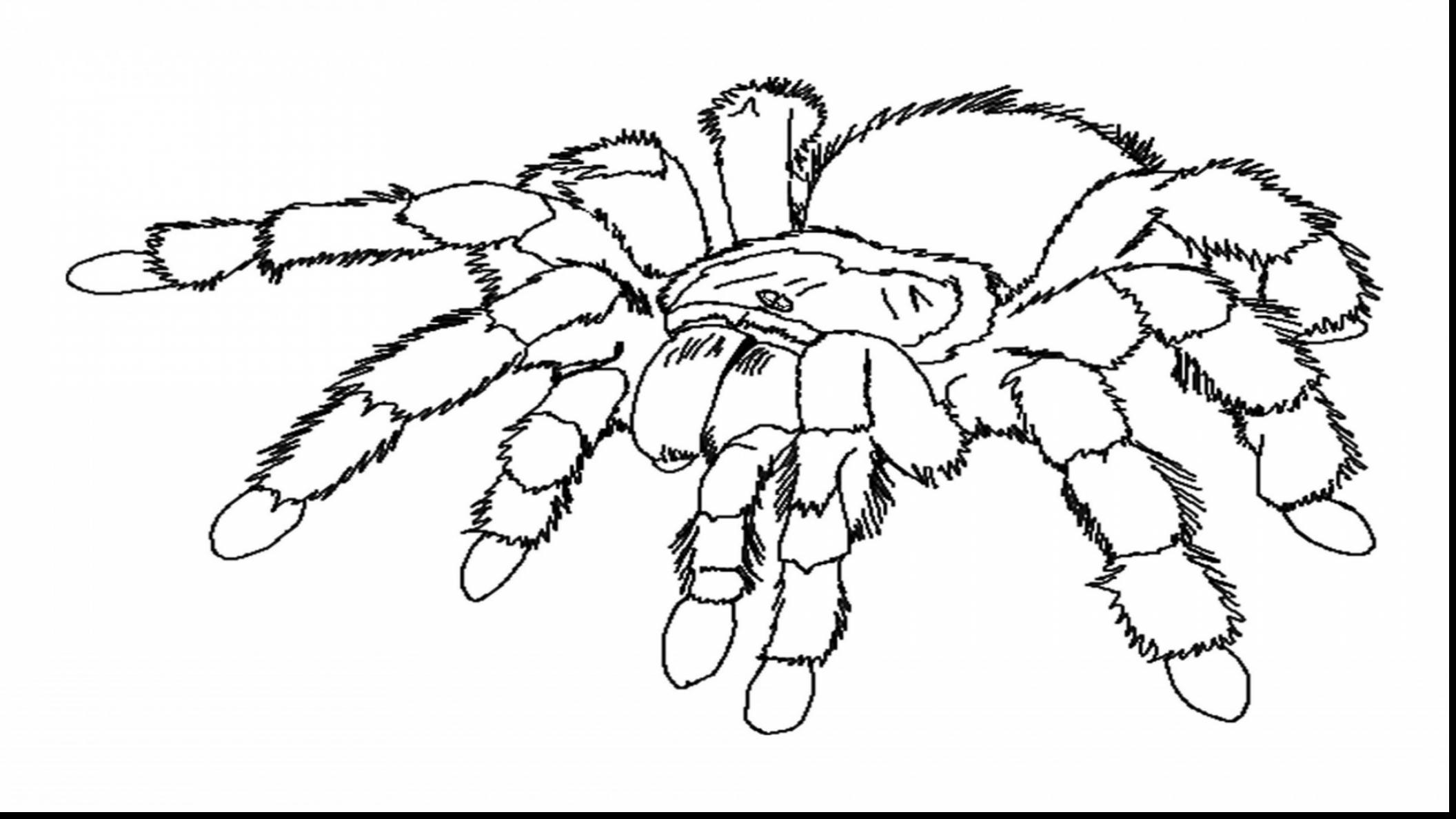 Spider Drawing Easy At Getdrawings