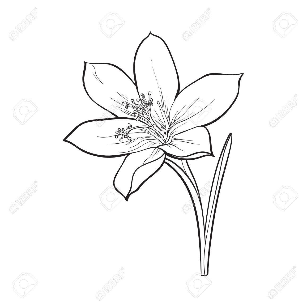 Spring Flower Drawing At Getdrawings