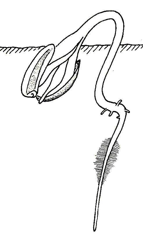 Seed Sprout Coloring Pages