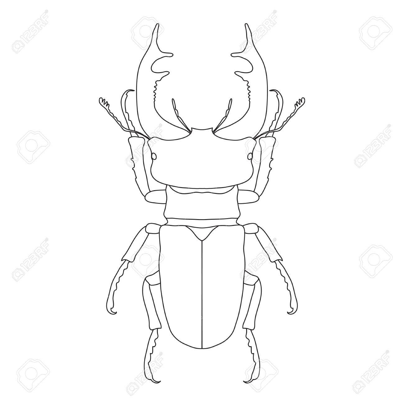 The Best Free Beetle Drawing Images Download From 602