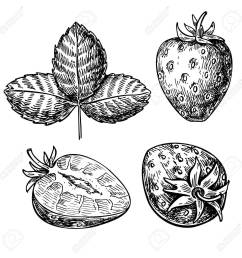 1300x1300 strawberry vector drawing set isolated hand drawn berry slice [ 1300 x 1300 Pixel ]