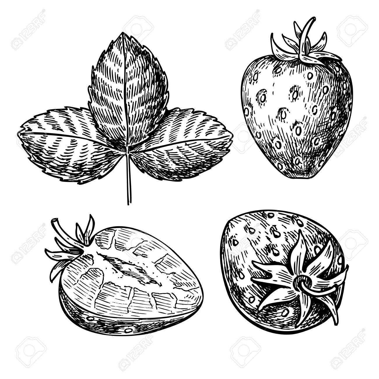 hight resolution of 1300x1300 strawberry vector drawing set isolated hand drawn berry slice