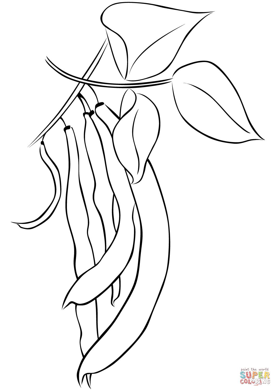 String Beans Drawing At Getdrawings