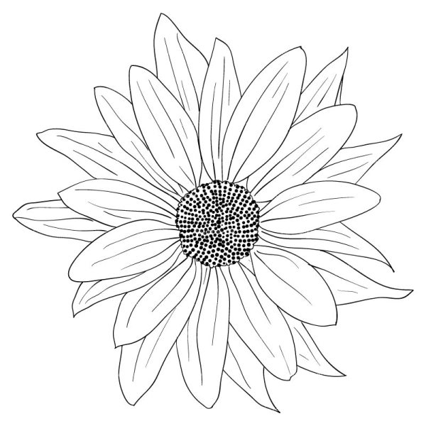 sunflower drawing black and white