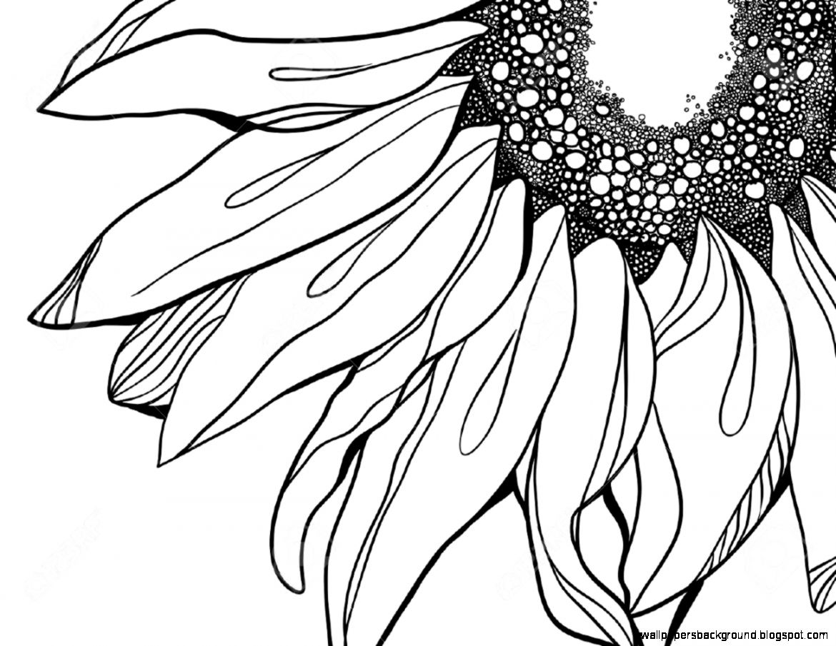 Sunflower Drawing Black And White At Getdrawings