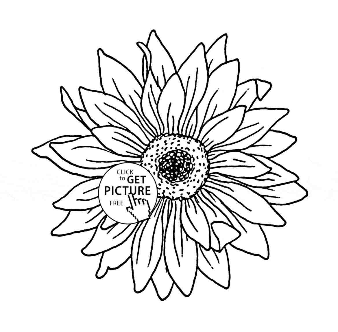 Sunflower Outline Drawing At Getdrawings