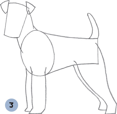 Cairn Terrier Drawing At Free For