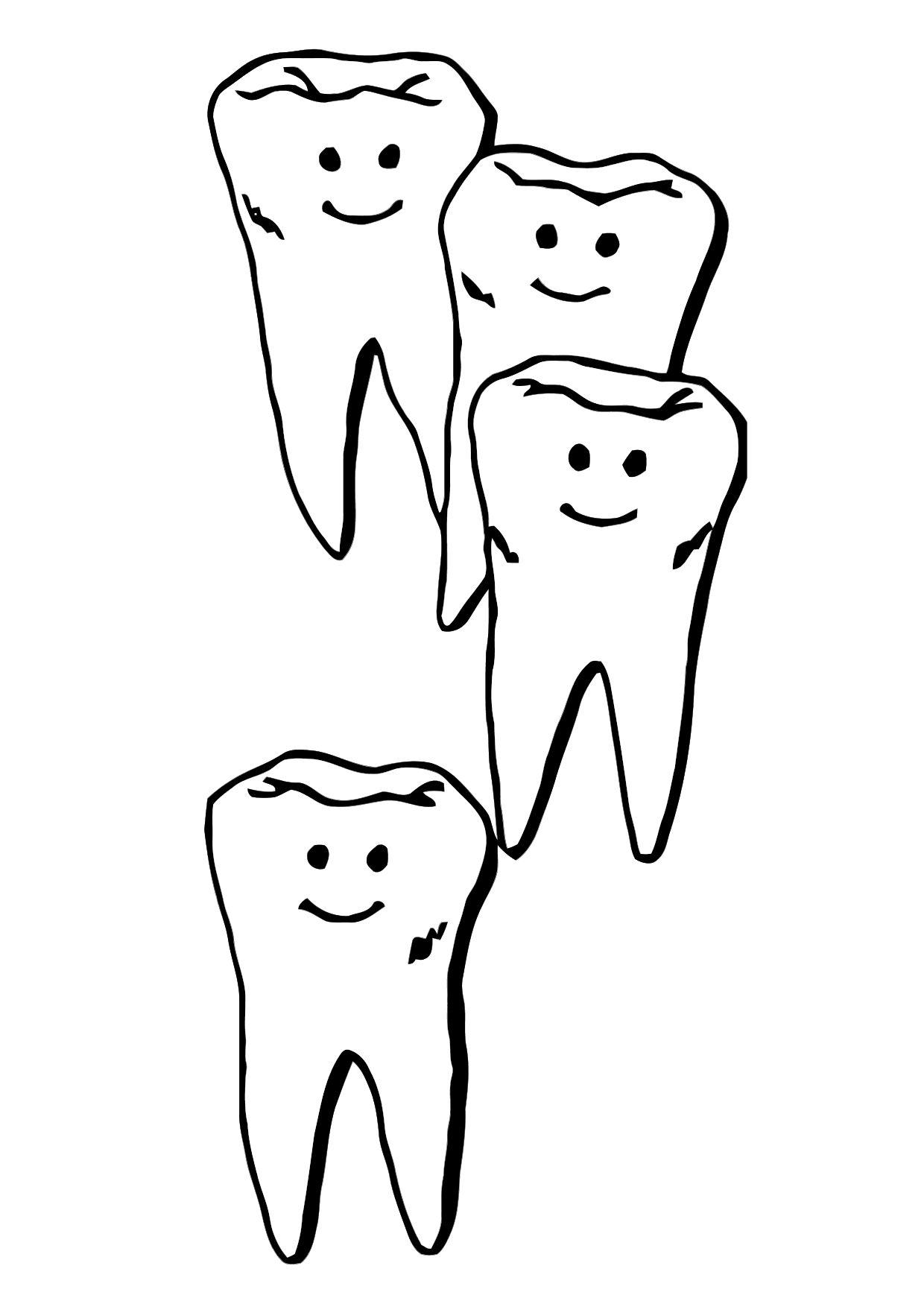 Tooth Line Drawing At Getdrawings