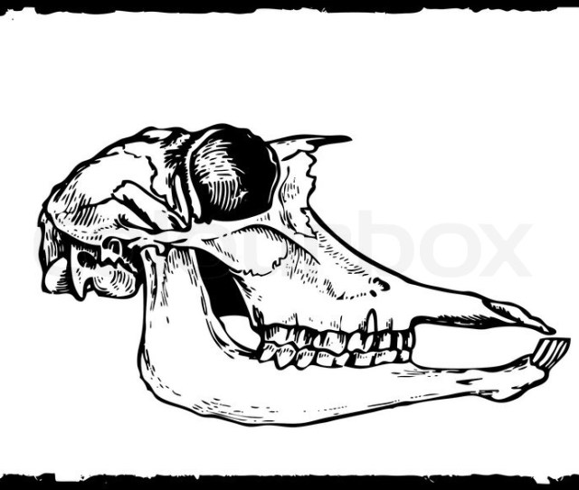 X Vector Drawing Skull On White Paper Stock Vector Colourbox
