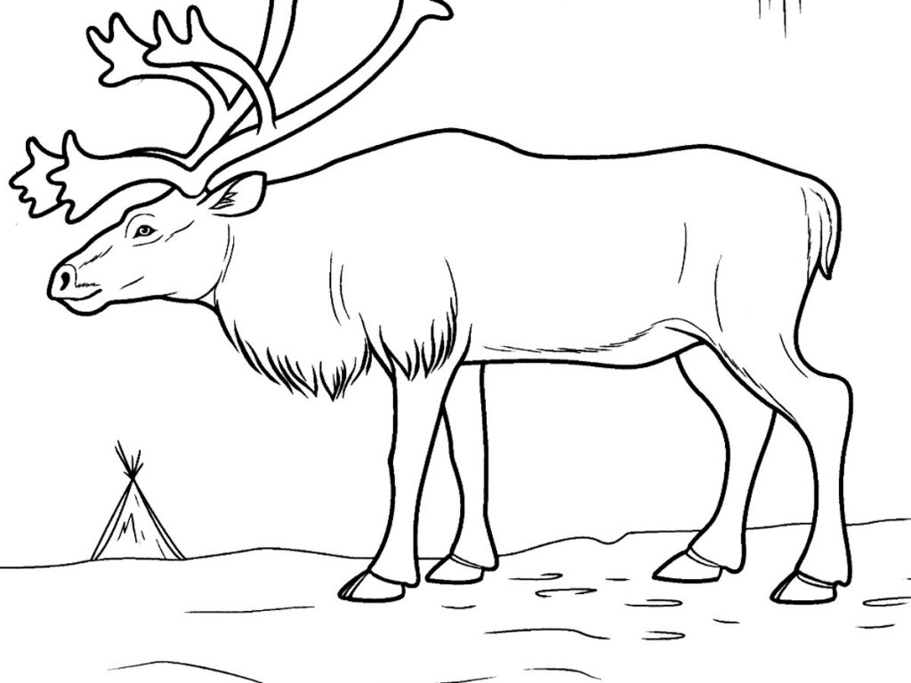 The best free Tundra drawing images. Download from 86 free