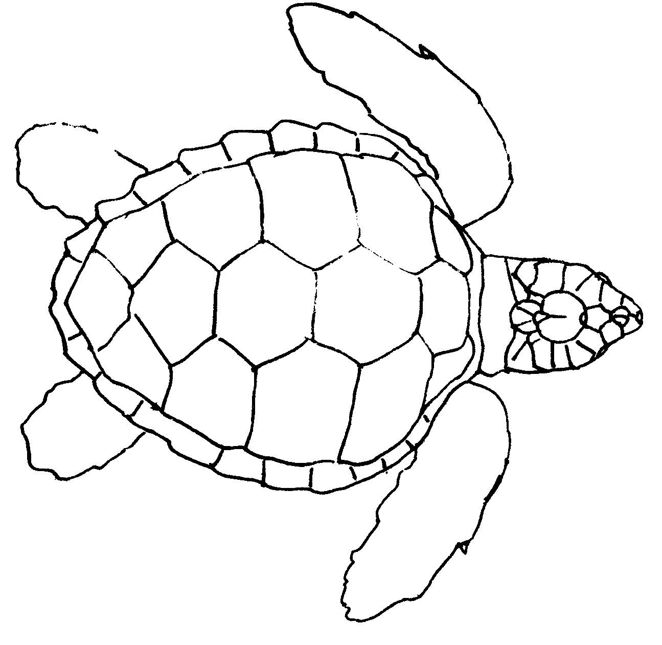 Turtles Step By Step Drawing At Getdrawings