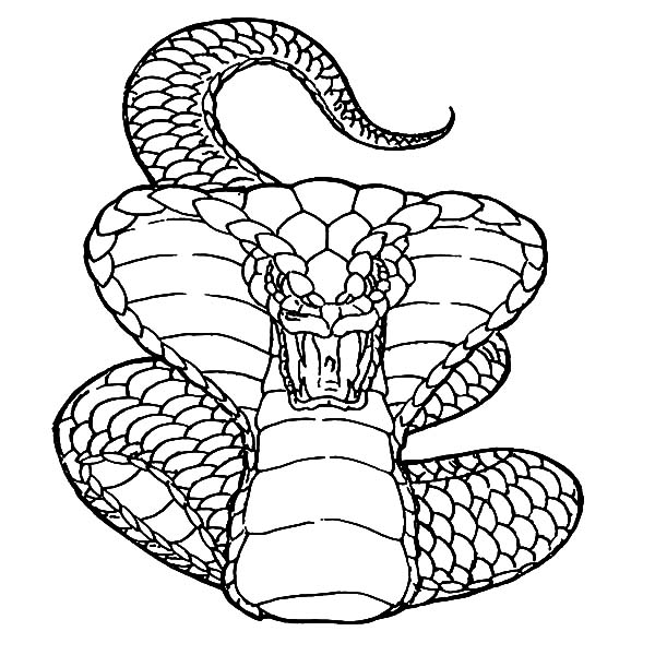 Python Snake Drawing At Getdrawings Com