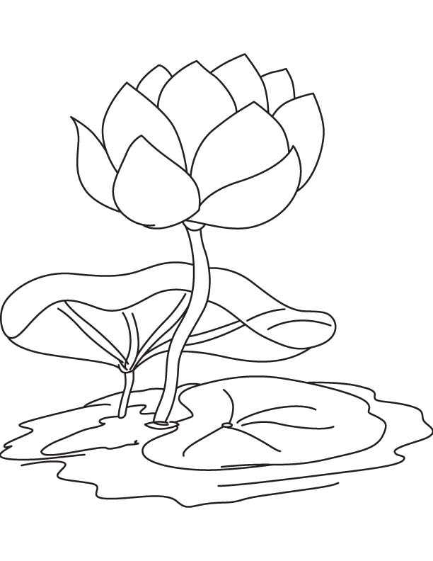 Water Lily Flower Drawing At Getdrawings Com