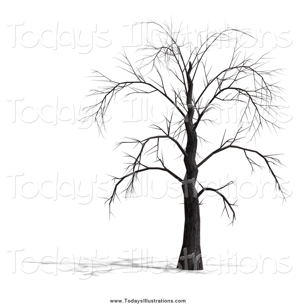 Weeping Willow Tree Drawing At Getdrawings