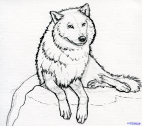 wolf arctic sketch easy drawing clipart animal step drawings wolves line face getdrawings sketches animals templates forest graphic using literacy