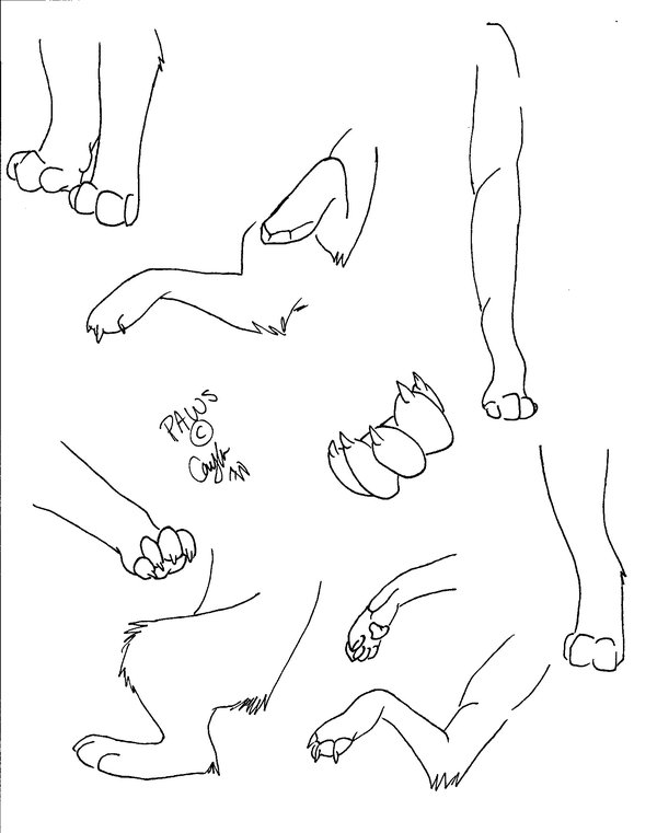 How To Draw Wolf Paws : Drawing, GetDrawings, Download