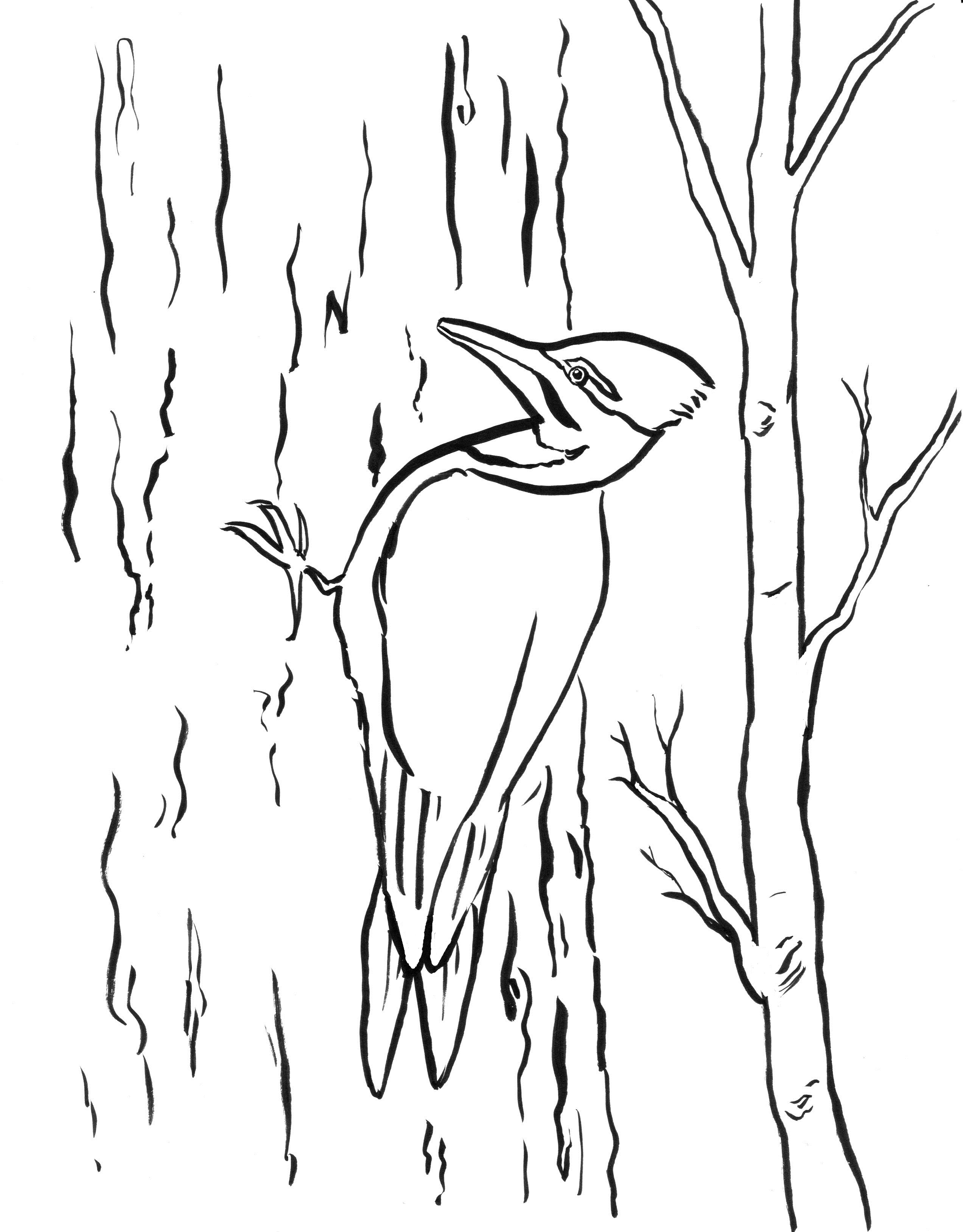 Woodpecker Drawing At Getdrawings