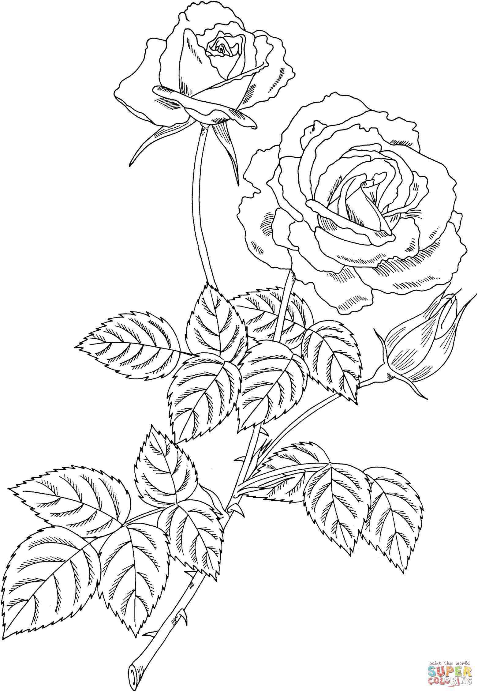 Yellow rose drawing at getdrawings free for personal use yellow rose drawing 8 yellow rose drawing