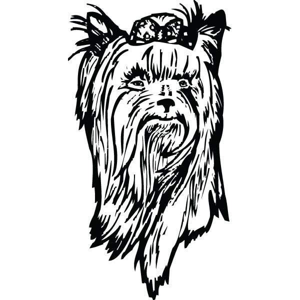 Teacup Yorkie Puppies Drawings