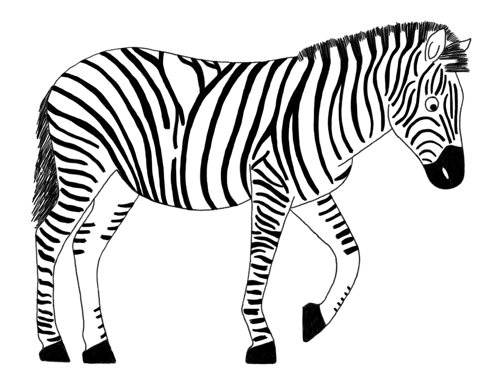 Zebra Line Drawing At Getdrawings