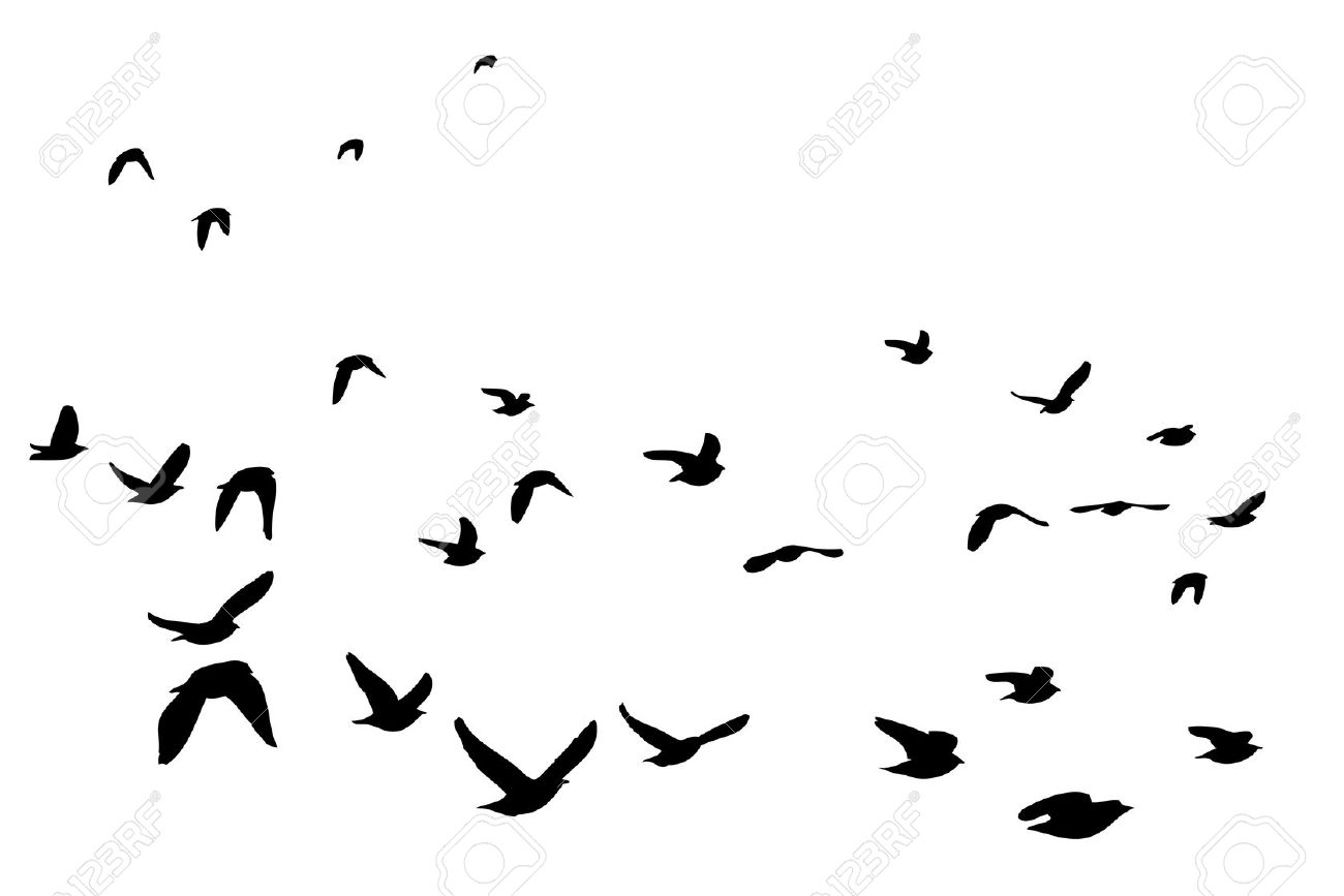 Bird Clipart Silhouette At Getdrawings