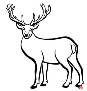 deer outline clipart head drawing silhouette buck clip animal dear antelope reindeer easy printable cliparts fresh animals clipartmag getdrawings pencil