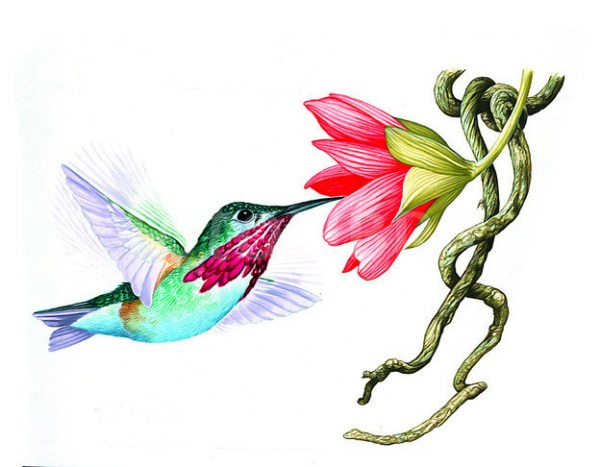free hummingbird silhouette clip