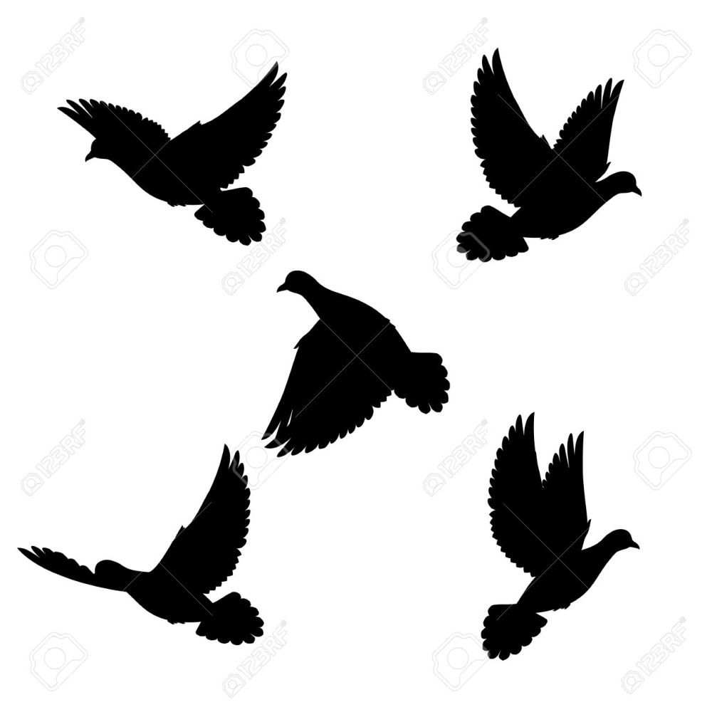 medium resolution of 1300x1300 dove hunting clipart collection