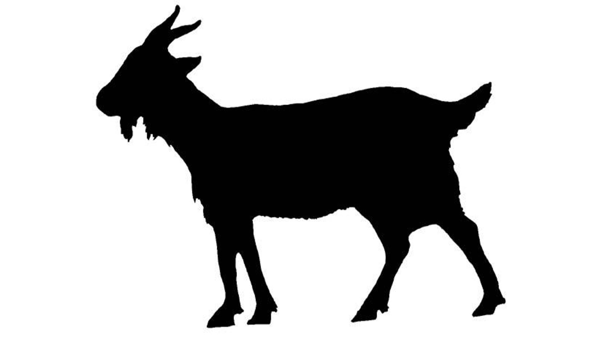 Show Goat Silhouette At Getdrawings Com Free For Personal Use Show Goat Silhouette Of Your Choice