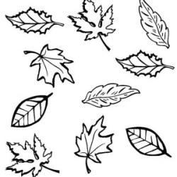 outline autumn leaf drawing drawings collection getdrawings