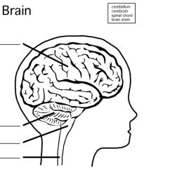 Blank Ear Diagram Without Labels How Credit Card Processing Works Brain Drawing With At Getdrawings Com Free For Personal Use 960x720 To Label Choice Image