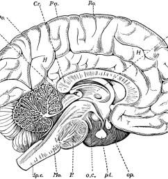 1280x1031 blank label brain parts diagram drawn brain inside labeled [ 1280 x 1031 Pixel ]