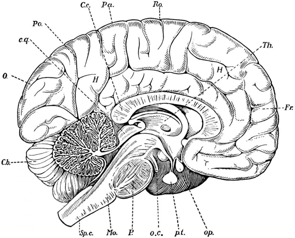 medium resolution of 1280x1031 blank label brain parts diagram drawn brain inside labeled