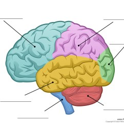 1500x1161 human brain diagram [ 1500 x 1161 Pixel ]