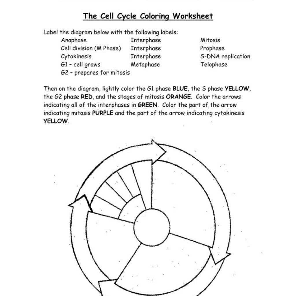 Worksheets Cell Cycle Labeling Worksheet Cheatslist Free