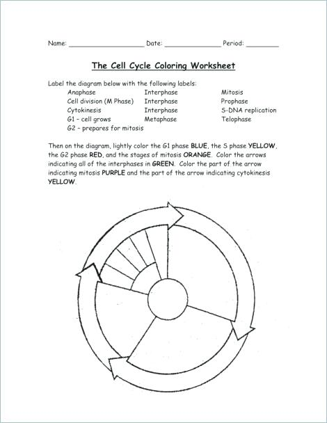 dna diagram worksheet car ac schematic cell cycle drawing at getdrawings com free for personal 470x608 replication coloring transcription sheet the