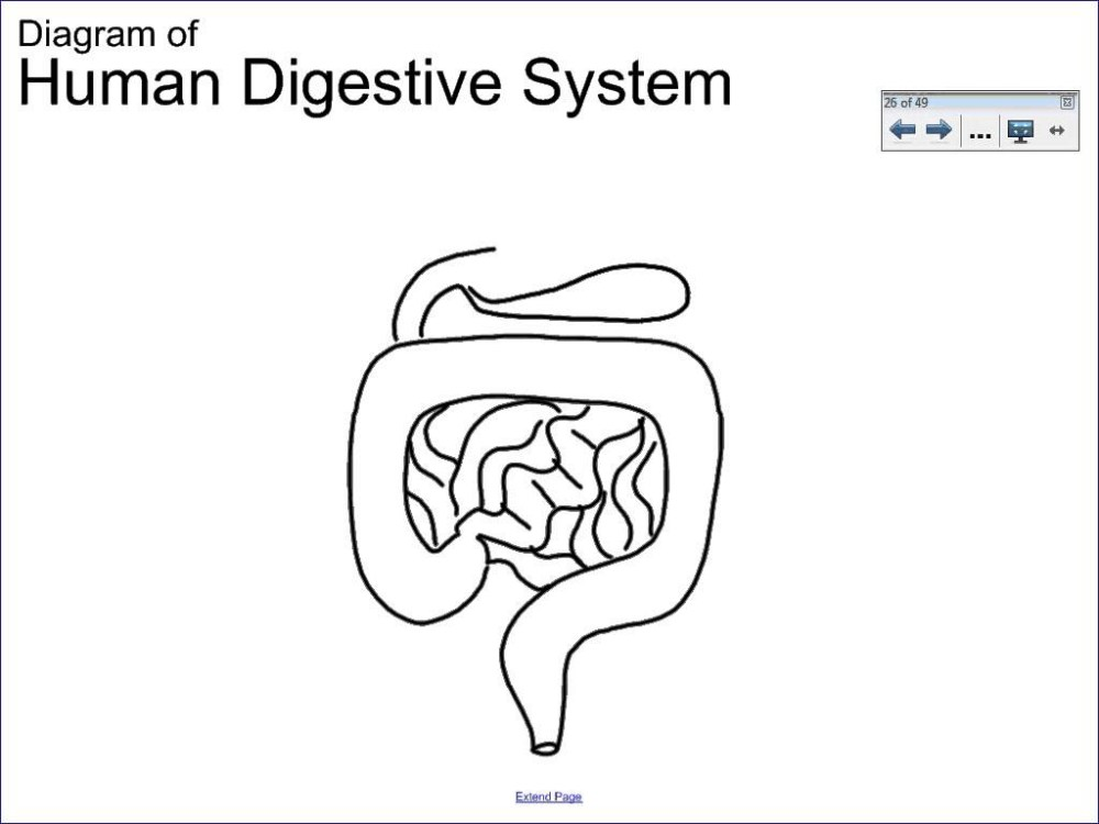 medium resolution of 1024x768 simple digestive system diagram drawing 6 1