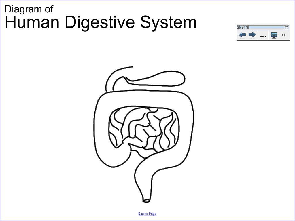 hight resolution of 1024x768 simple digestive system diagram drawing 6 1