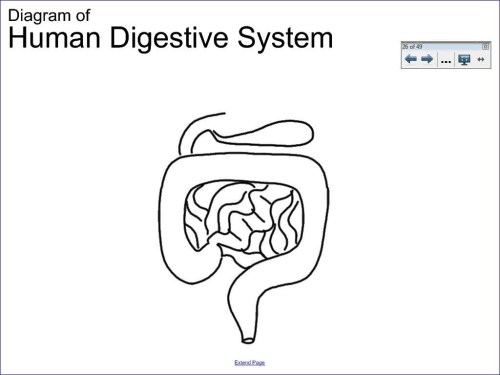 small resolution of 1024x768 simple digestive system diagram drawing 6 1