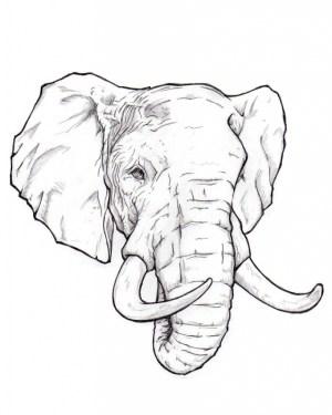 beginners drawing easy sketches getdrawings