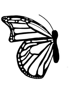 butterfly side drawing monarch getdrawings