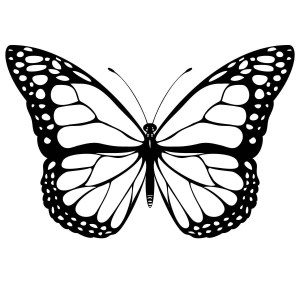 butterfly drawing monarch side coloring pages simple getdrawings